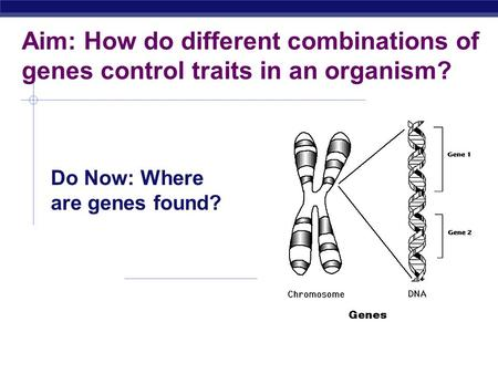 Aim: How do different combinations of genes control traits in an organism? Do Now: Where are genes found?