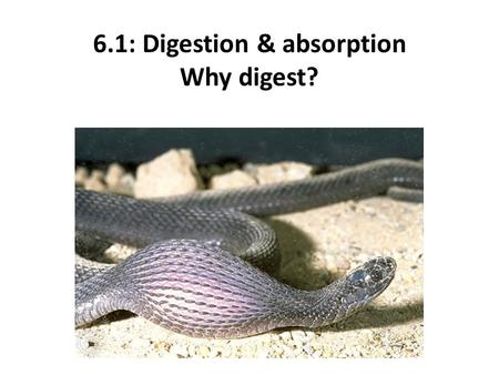 essential biology 6.1 digestion answers