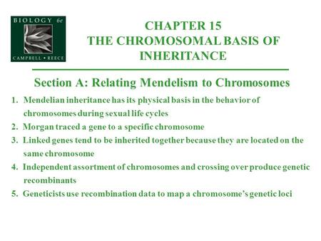 CHAPTER 15 THE <strong>CHROMOSOMAL</strong> BASIS OF INHERITANCE Section A: Relating Mendelism to <strong>Chromosomes</strong> 1.Mendelian inheritance has its physical basis in the behavior.