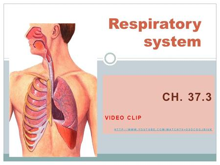 CH. 37.3 VIDEO CLIP  Respiratory system.
