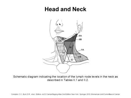 Renal Pelvis And Ureter Anatomy Of The Renal Pelvis And Ureter