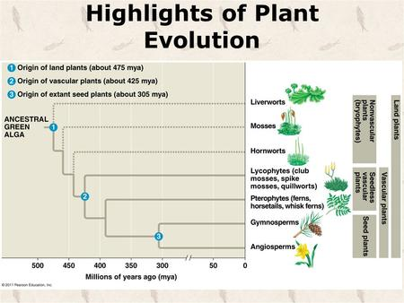 Highlights of Plant Evolution. Alternation of Generation Both a __________ haploid and __________ diploid stages in the life cycles.