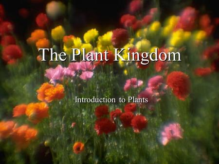 The Plant Kingdom Introduction to Plants. The Plant Kingdom Organisms are _______________, have ___________ & ___________. They ___________ their own.