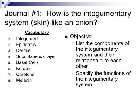 Journal #1: How is the integumentary system (skin) like an onion?