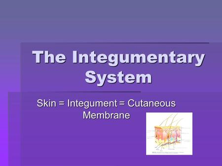The Integumentary System Skin = Integument = Cutaneous Membrane.