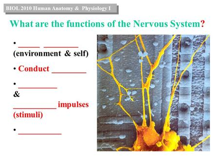 What are the functions of the Nervous System? _____ ________ (environment & self) Conduct ________ _________ & __________ impulses (stimuli) __________.