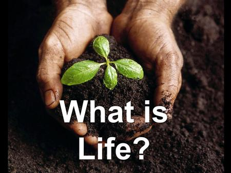 What is Life?. All living things share 6 important characteristics: 1.Cellular Organization: Cells: The basic unit of structure and function in an organism.