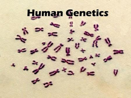 Human Genetics Review – What is a GENE? A gene is the unit that controls traits Genes are passed from parents to offspring Genes are located on our chromosomes.