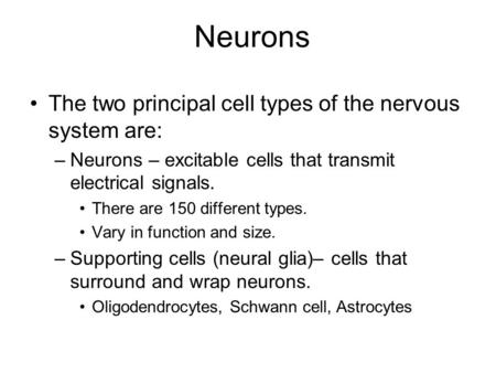 Neurons The two principal cell types of the nervous system are: