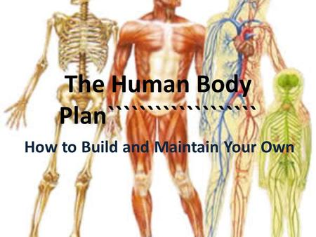 The Human Body Plan``````````````````` How to Build and Maintain Your Own.