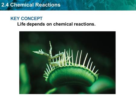 2.4 Chemical Reactions KEY CONCEPT Life depends on chemical reactions.