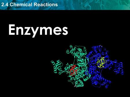 Enzymes.