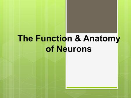 The Function & Anatomy of Neurons What is a Neuron?  It is the cell of nerve tissue that is responsive and conducts impulses within the Nervous System.