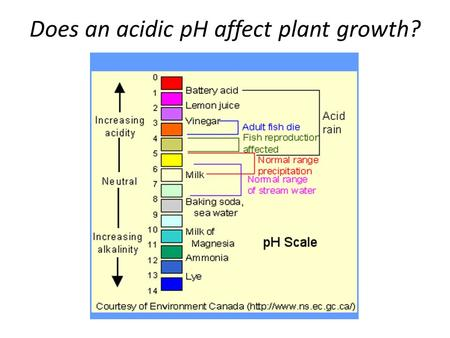 effect of milk on plant growth