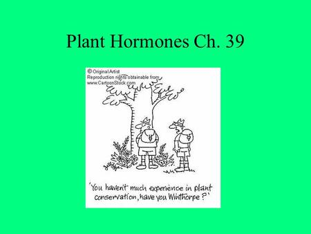 Plant Hormones Ch. 39. I. Plant Hormones- A compound produced by one part of the plant Hormones- A compound produced in one area of an organism and.