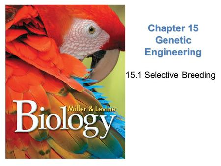 Lesson Overview Lesson Overview Meeting Ecological Challenges Chapter 15 Genetic Engineering 15.1 Selective Breeding 15.1 Selective Breeding.