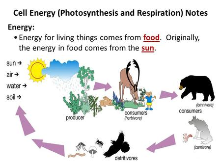 Cell Energy (Photosynthesis and Respiration) Notes Energy: Energy for living things comes from food. Originally, the energy in food comes from the sun.