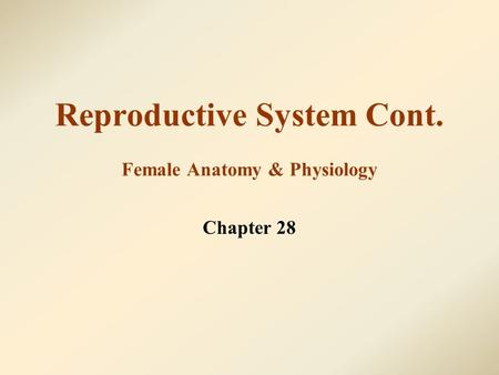 Reproductive System Cont. Female Anatomy & Physiology Chapter 28.