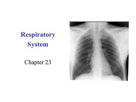 Respiratory System Chapter 23. Respiration Overview.