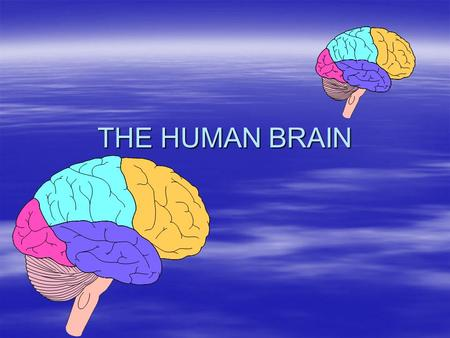 THE HUMAN BRAIN. THE AMAZING BRAIN!!! - the brain contains about 35 billion neurons! - all of our dreams, passions, memories, and plans are the result.