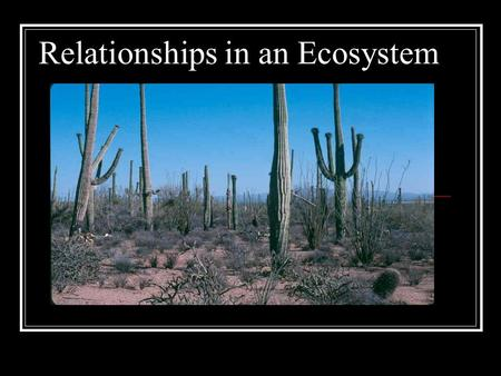 Relationships in an Ecosystem. Instructions: View this powerpoint on concepts and terms that will be useful to you in understanding relationships within.