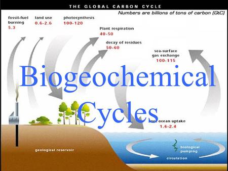 Biogeochemical Cycles. The movement of nutrients from the non- living world into living organisms, and then back again.