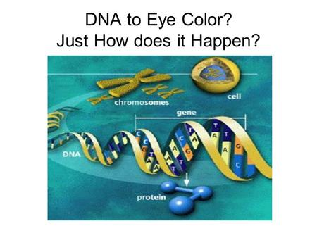 DNA to Eye Color? Just How does it Happen? Problem? How do we go from DNA to individual traits?