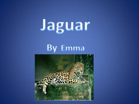 Habitat Jaguars live in the rain forest in south America. They roam alone through the forest. Jaguars sleep on tree branches.