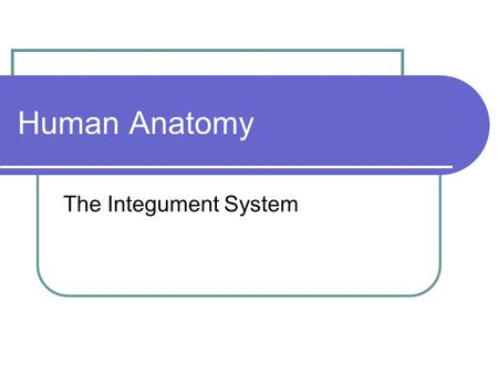 Human Anatomy The Integument System. Function(s) 1. Physical protection 2. Temperature Regulation 3. Protects against water loss 4. Excretion 5. Synthesis.