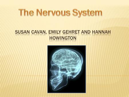  Nervous system helps coordinate body functions to maintain homeostasis  Enables body to respond to changing conditions  Nerve cells are called neurons-
