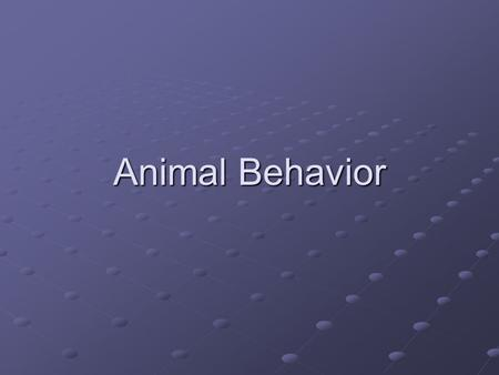 Animal Behavior. Behavior is the way an organism reacts to changes in its internal condition or external environment. A stimulus is any kind of signal.