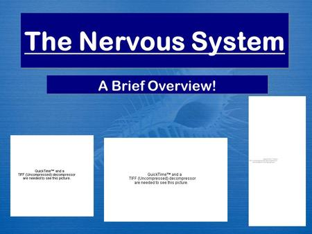 The Nervous System A Brief Overview!. What you will understand at the end of this lecture:  Functions of the nervous system  Divisions of the nervous.