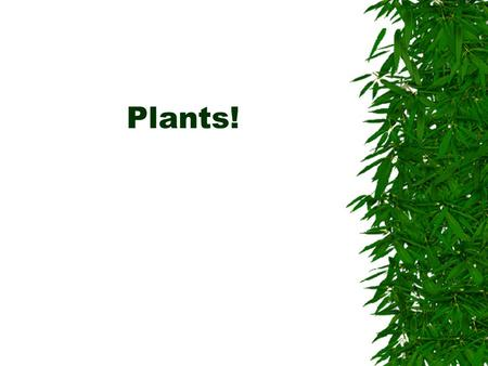 Plants!. Chloroplast: organelle Chlorophyll: green pigment  Pigment: substance that reflects some light and absorbs the rest.