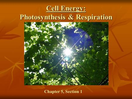 Cell Energy: Photosynthesis & Respiration Chapter 5, Section 1.