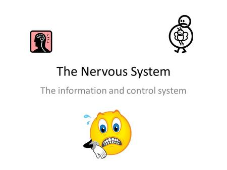 The Nervous System The information and control system.