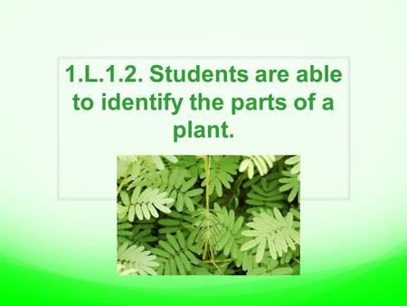 1.L.1.2. Students are able to identify the parts of a plant.