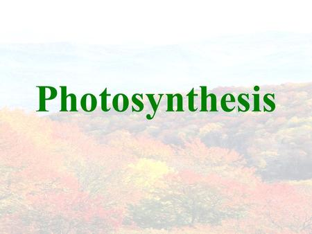 Photosynthesis. Photosynthesis in Overview Process by which plants store the energy of sunlight into sugars. Requires sunlight, water, and carbon dioxide.