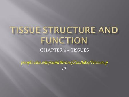 CHAPTER 4 – TISSUES people.eku.edu/sumithrans/Zoo/labs/Tissues.p pt.