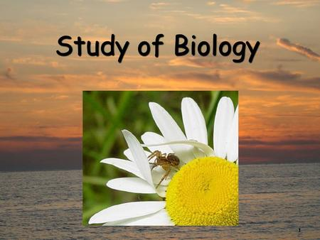 1 Study of Biology. 2 What is Biology? Biology is the study of all living thingsBiology is the study of all living things Living things are called organisms.