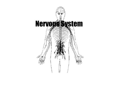 Nervous System. Organization of Peripheral Nervous System (PNS)