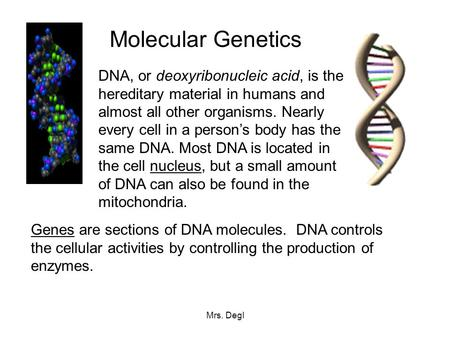 Mrs. Degl Molecular Genetics DNA, or deoxyribonucleic acid, is the hereditary material in humans and almost all other organisms. Nearly every cell in a.