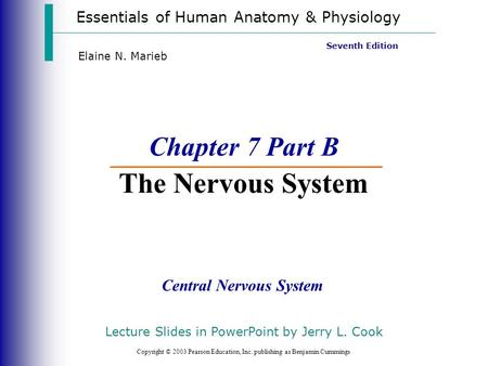 Chapter 7 Part B The Nervous System