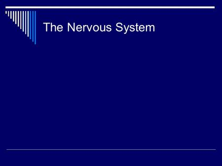 The Nervous System. To return to the chapter summary click escape or close this document. Human Nervous System.