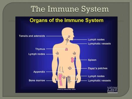 The Immune System.