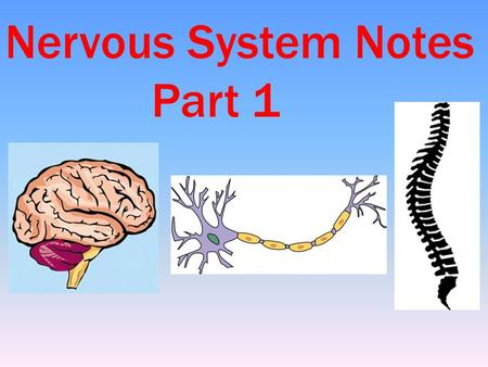 Nervous System Notes Part 1. Nerve impulses to and from the brain travel as fast as 170 miles per hour. INTERESTING NERVOUS SYSTEM FACTS The brain operates.