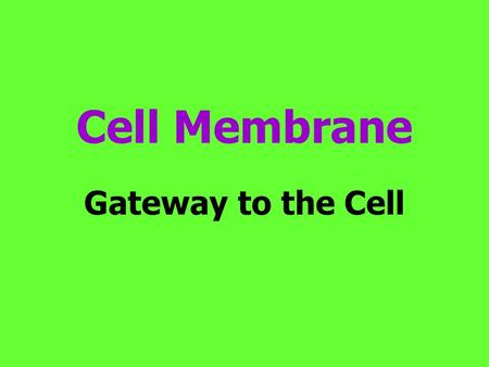 Cell Membrane Gateway to the Cell. Cell Membrane The cell membrane is flexible and allows a unicellular organism to move.