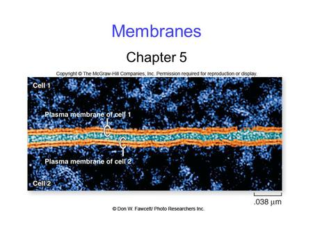 Membranes Chapter 5. 2 Membrane Structure fluid mosaic model: Cellular membranes have 4 components: 1. phospholipid bilayer 2. transmembrane proteins.