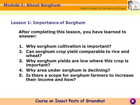 Virtual Academy for the Semi Arid Tropics Course on Insect Pests of Groundnut Module 1: About Sorghum After completing this lesson, you have learned to.