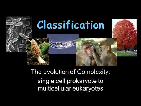 Classification The evolution of Complexity: single cell prokaryote to multicellular eukaryotes.