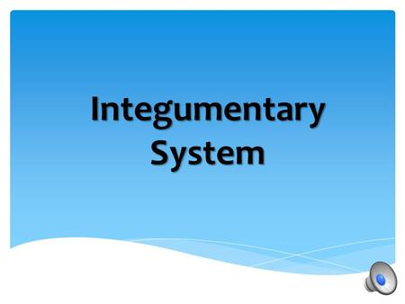 "Integumentary System  Composed of skin, hair, sweat glands, and nails  The name is derived from the Latin integumentum, which means ""a covering."" "